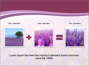 Lavender flowers PowerPoint Templates - Slide 22