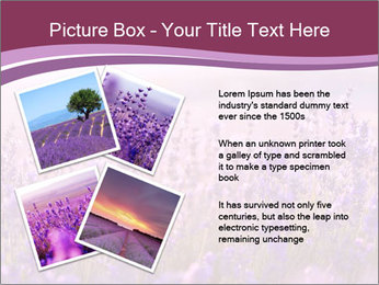 Lavender flowers PowerPoint Templates - Slide 23