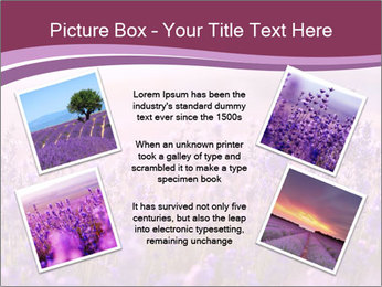 Lavender flowers PowerPoint Templates - Slide 24