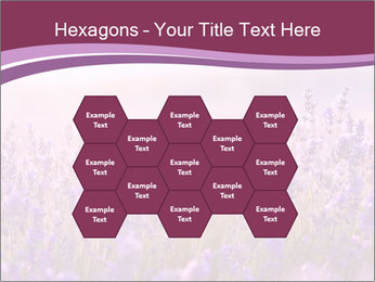 Lavender flowers PowerPoint Templates - Slide 44
