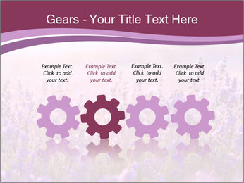 Lavender flowers PowerPoint Templates - Slide 48