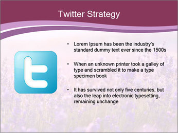 Lavender flowers PowerPoint Templates - Slide 9