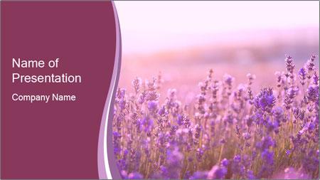 Lavender flowers PowerPoint Template