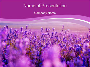 Lavender Field PowerPoint Template - Slide 1