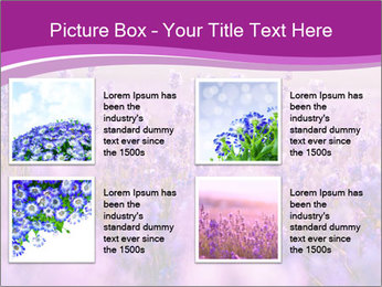 Lavender Field PowerPoint Template - Slide 14