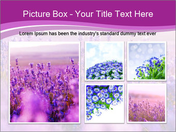 Lavender Field PowerPoint Template - Slide 19