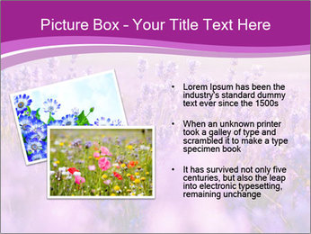 Lavender Field PowerPoint Template - Slide 20