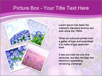 Lavender Field PowerPoint Template - Slide 23