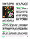 0000094329 Word Templates - Page 4