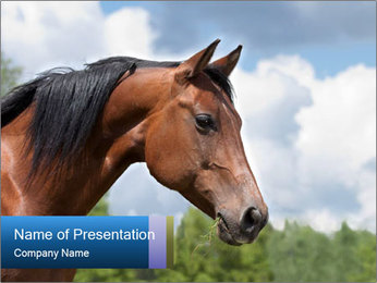 Horse mare PowerPoint Templates - Slide 1