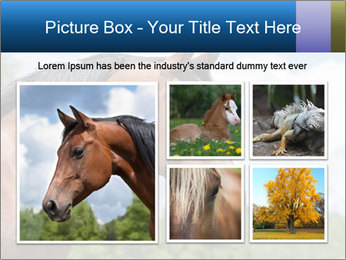 Horse mare PowerPoint Templates - Slide 19