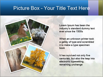 Horse mare PowerPoint Templates - Slide 23