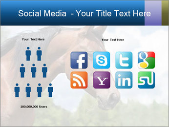 Horse mare PowerPoint Templates - Slide 5