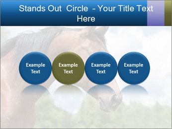 Horse mare PowerPoint Templates - Slide 76