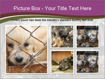 Dog PowerPoint Templates - Slide 19