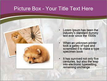 Dog PowerPoint Templates - Slide 20