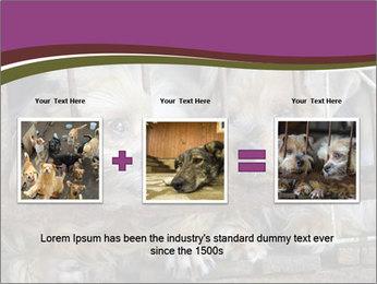 Dog PowerPoint Templates - Slide 22