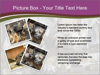 Dog PowerPoint Templates - Slide 23