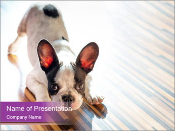 French bulldog puppy PowerPoint Templates - Slide 1