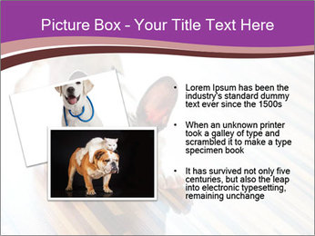 French bulldog puppy PowerPoint Templates - Slide 20