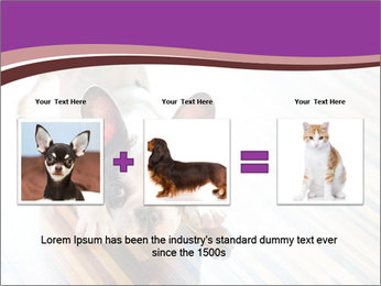 French bulldog puppy PowerPoint Templates - Slide 22