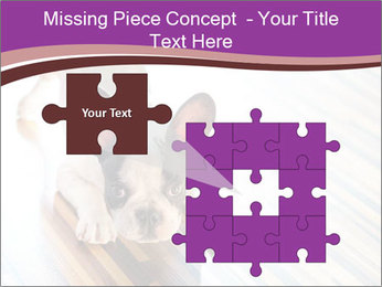 French bulldog puppy PowerPoint Templates - Slide 45