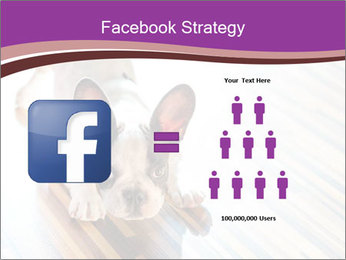 French bulldog puppy PowerPoint Templates - Slide 7