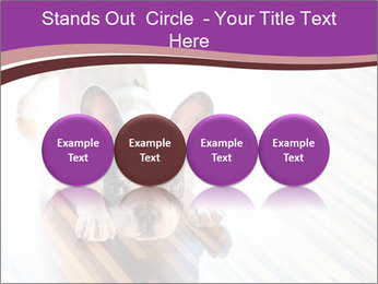 French bulldog puppy PowerPoint Templates - Slide 76