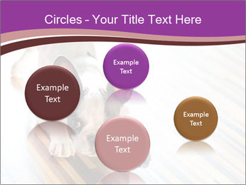 French bulldog puppy PowerPoint Templates - Slide 77
