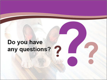 French bulldog puppy PowerPoint Templates - Slide 96