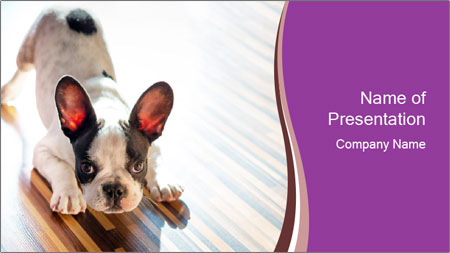 French bulldog puppy PowerPoint Template