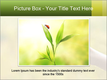 Butterfly PowerPoint Template - Slide 16