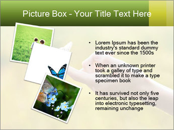 Butterfly PowerPoint Template - Slide 17