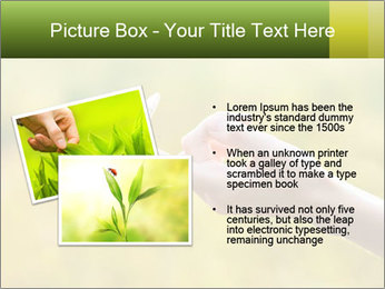 Butterfly PowerPoint Template - Slide 20