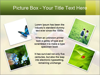 Butterfly PowerPoint Template - Slide 24