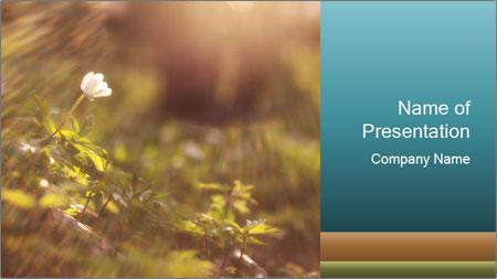 Flower light PowerPoint Template