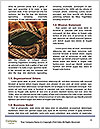0000094410 Word Templates - Page 4
