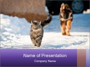 German shepherd puppy PowerPoint Templates