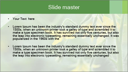 Growing tomatoes PowerPoint Template - Slide 2