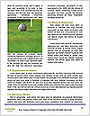 0000094444 Word Templates - Page 4