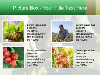Worker picking tobacco leaves PowerPoint Templates - Slide 14