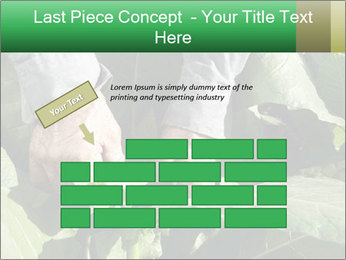 Worker picking tobacco leaves PowerPoint Templates - Slide 46