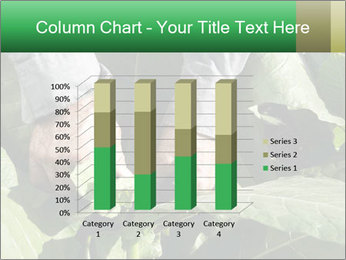 Worker picking tobacco leaves PowerPoint Templates - Slide 50