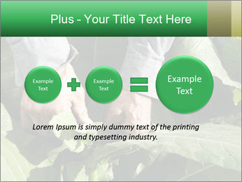 Worker picking tobacco leaves PowerPoint Templates - Slide 75