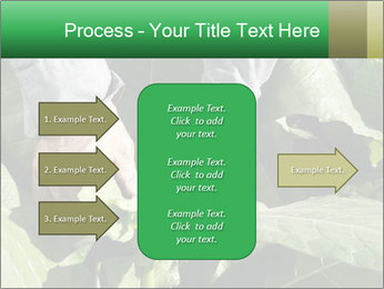Worker picking tobacco leaves PowerPoint Templates - Slide 85