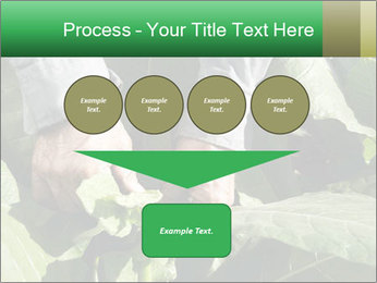 Worker picking tobacco leaves PowerPoint Templates - Slide 93