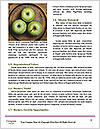 0000094499 Word Templates - Page 4