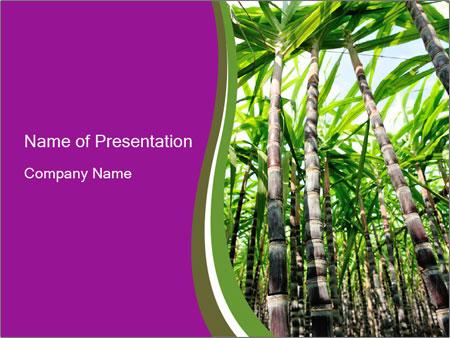Sugarcane plants PowerPoint Template