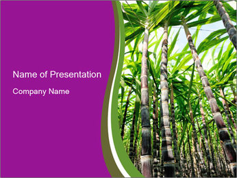 Sugarcane plants PowerPoint Template - Slide 1