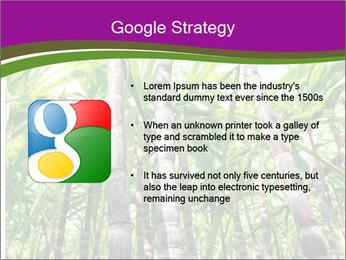 Sugarcane plants PowerPoint Template - Slide 10